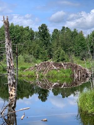 Beaver Condo 2