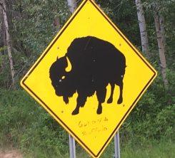 Buffalo sign