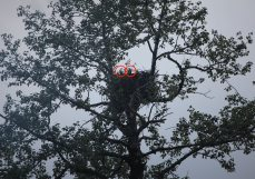 Eaglets at our campground in Seward at 10 PM