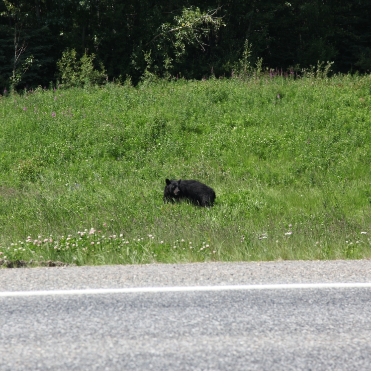 Third bear (out of five) to see today.