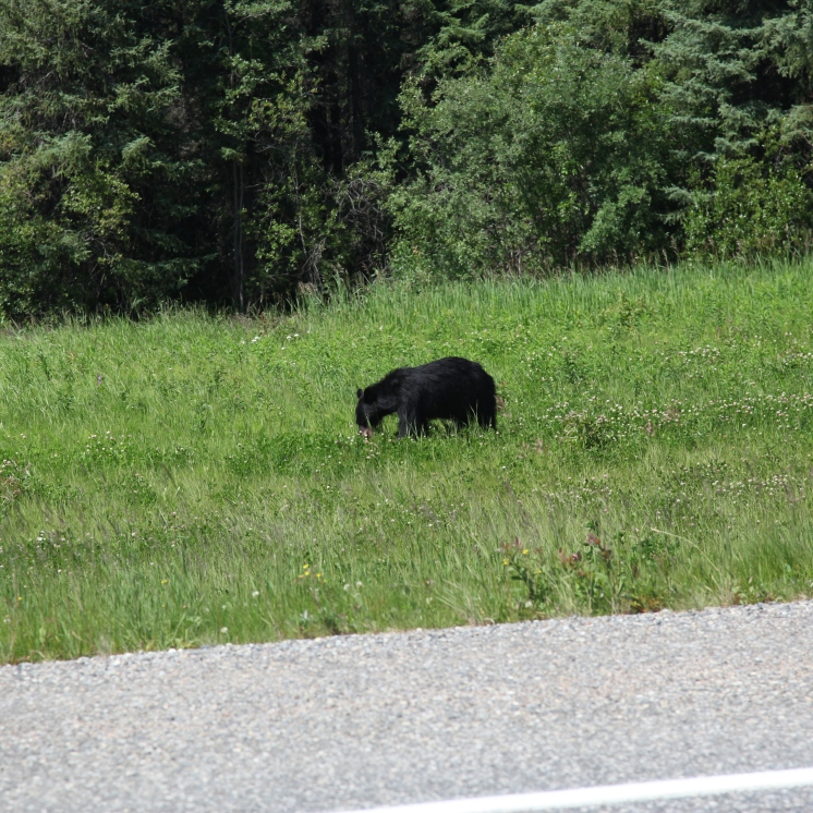 Our first bear of the day.
