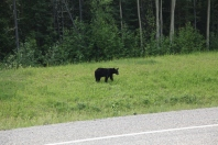 First bear of the day