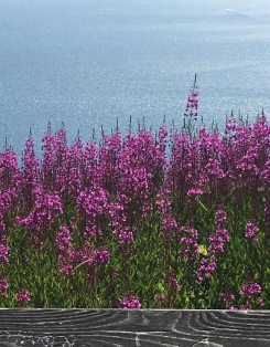 water view fireweed