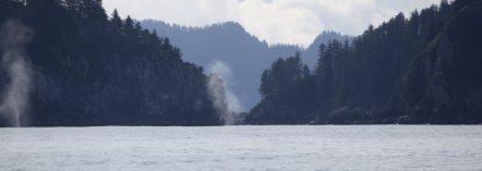 2 whale spouts