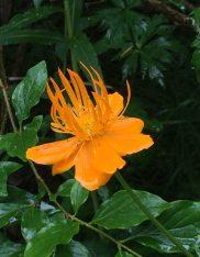 orange flower WLowell