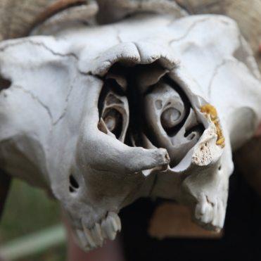 Spiral nostrils
