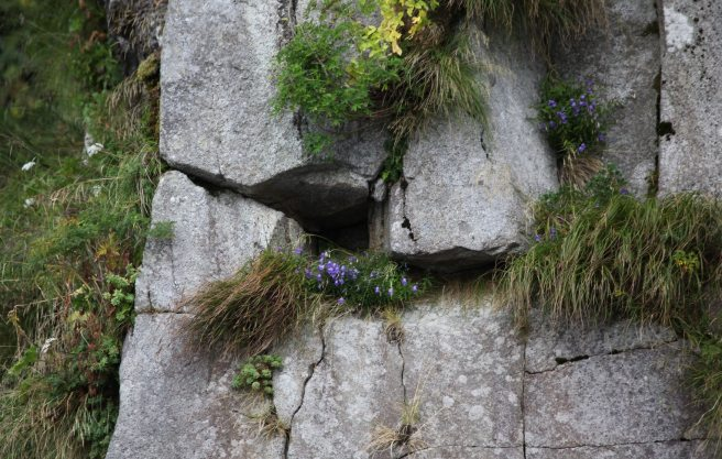 wild flowers in cracks